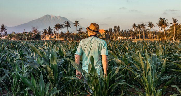 ท่องเที่ยวเชิงเกษตร